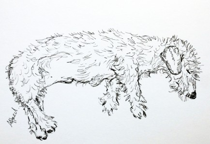 alfie lying sketch